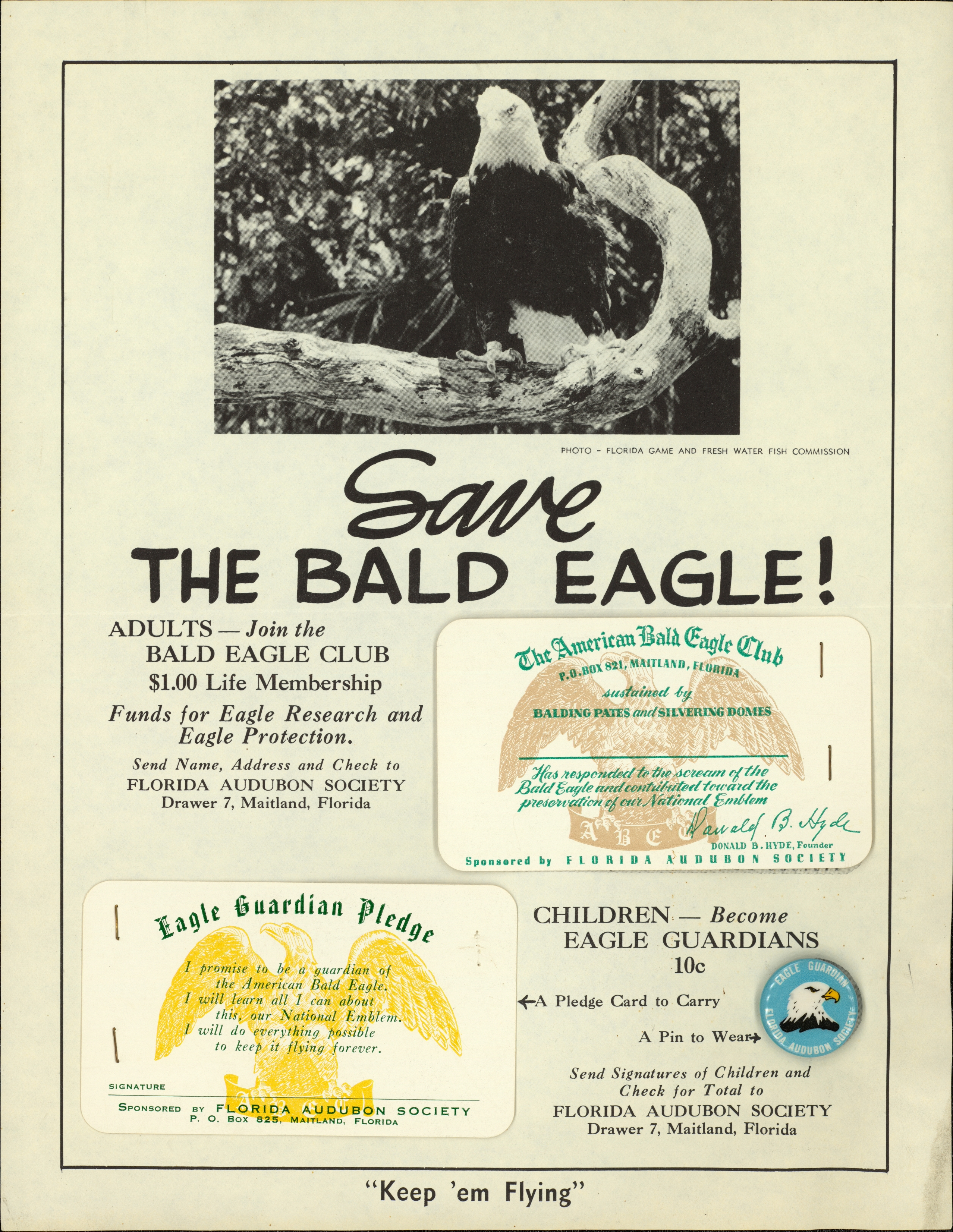 Save the eagle!